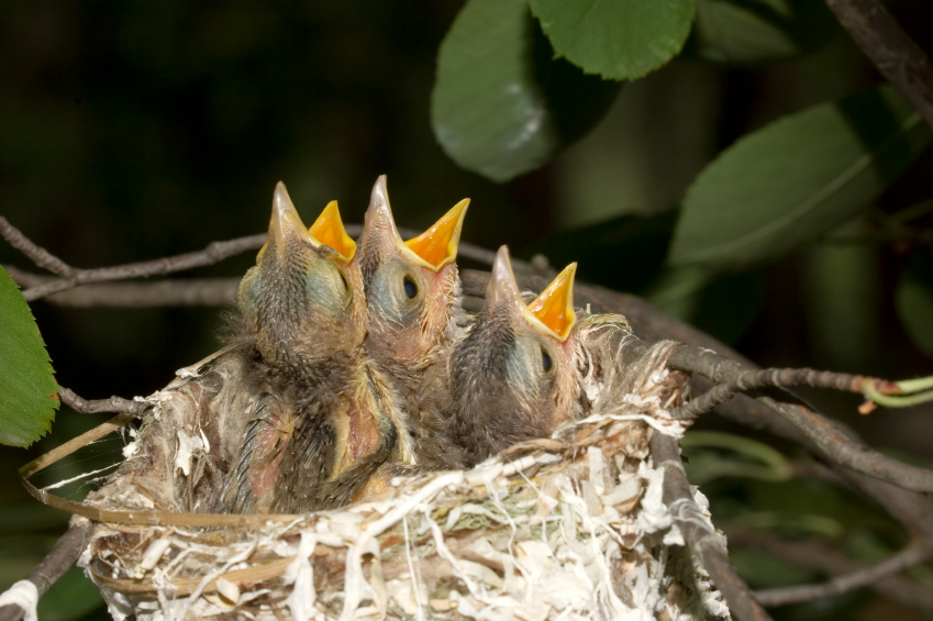 What To Do If You Find A Baby Bird Springbrook Animal