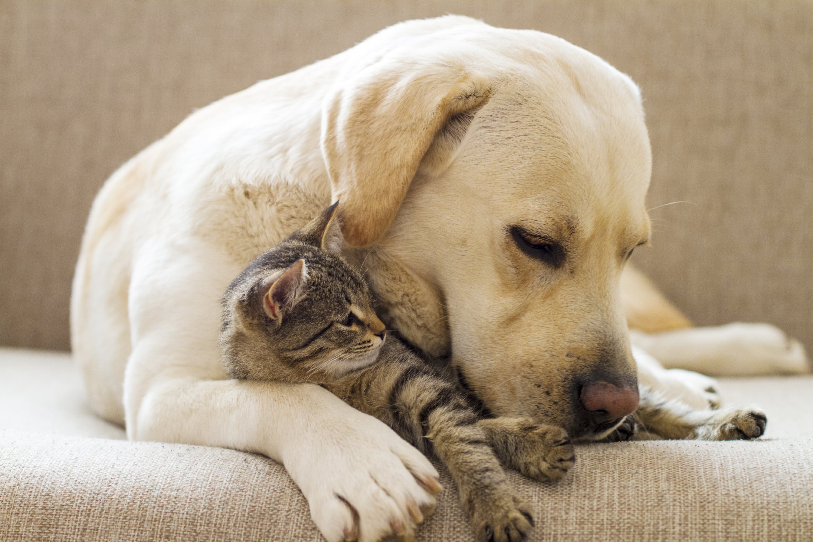 An Ounce Of Prevention Preventative Care Plans For Pets