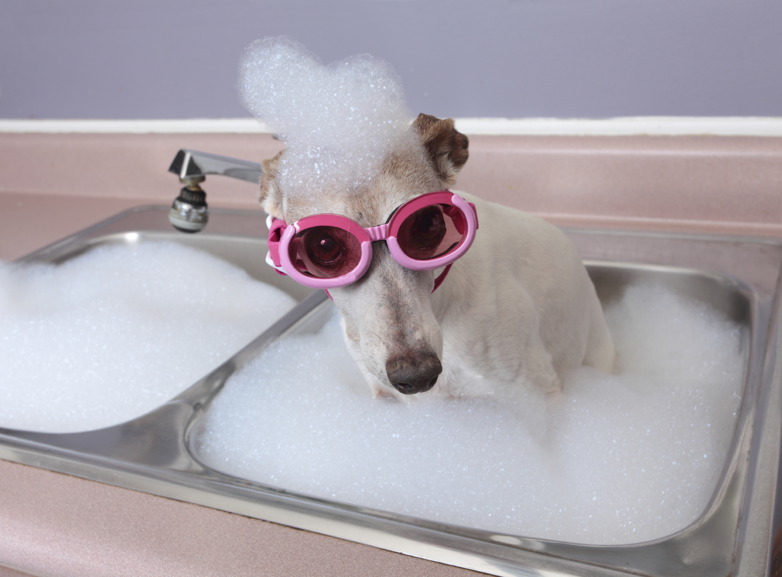 Pet Grooming Not Just For Frou Frou Dogs Springbrook