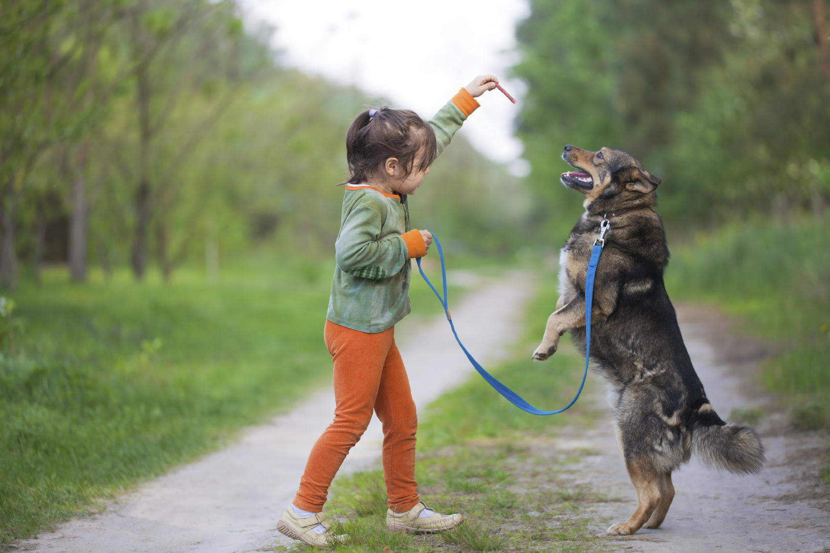 How To Train Your Dog Off Leash Walking