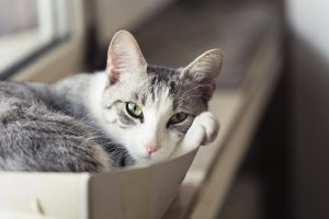Cats and boxes. What could be better?