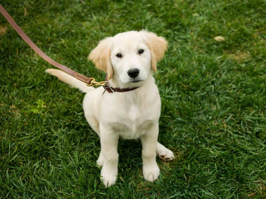 Puppy training is a vital part of responsible pet ownership