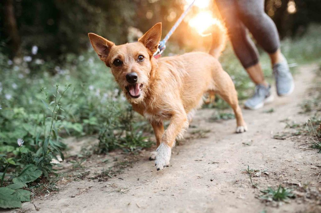 Running with your dog is great pet exercise and promotes pet health