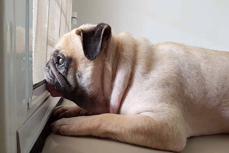 Separation anxiety in pets can be hard when school starts.