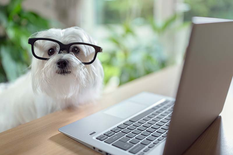 Pet insurance can defray the cost of veterinary care