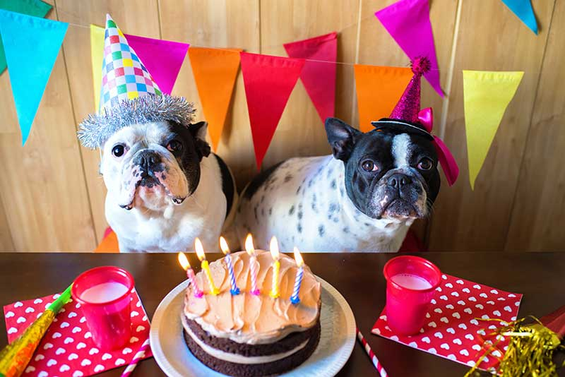 Pet birthday party ideas are fun