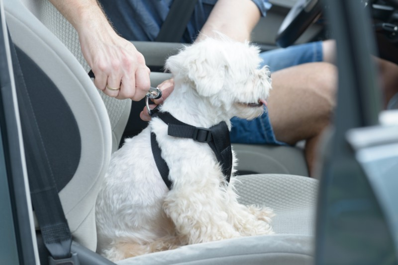 Traveling with a sick pet can take extra pet travel planning