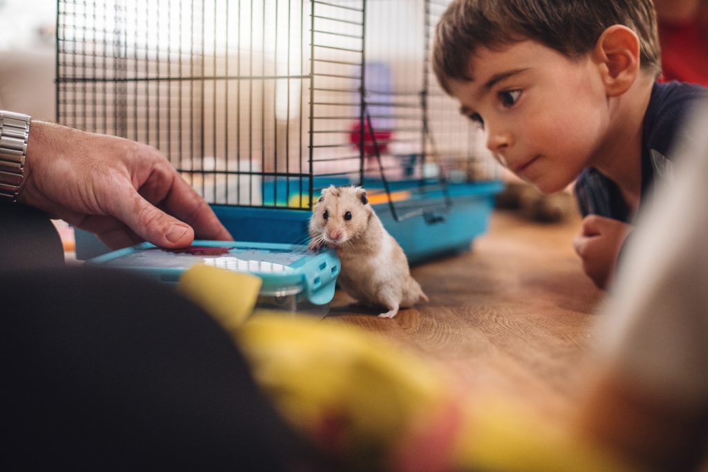 Springbrook father and boy play with hamster pocket pet.