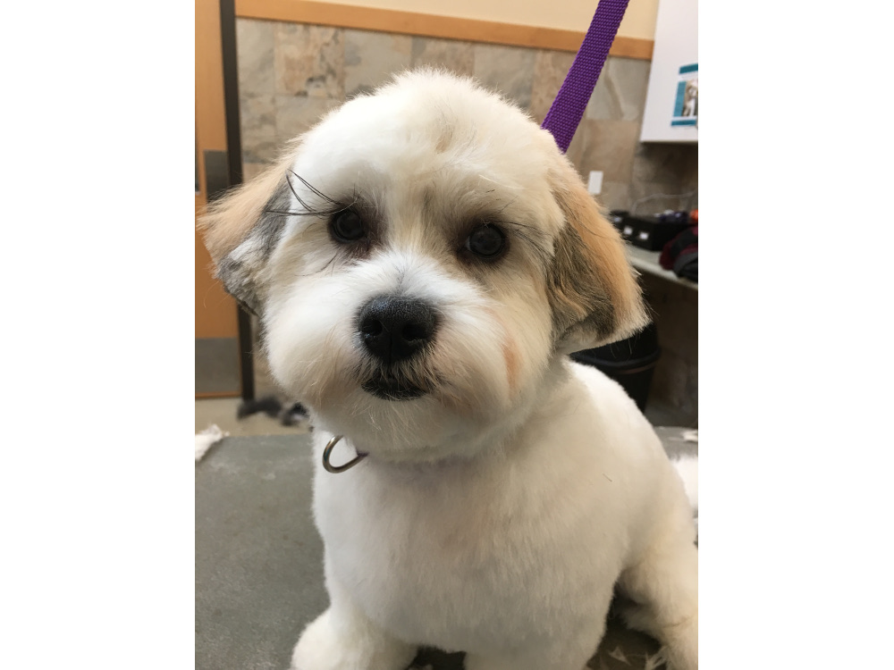 Pet Grooming Naperville, IL | Springbrook Animal Care Center