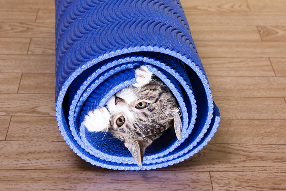 Kitty Rolled in Yoga Mat