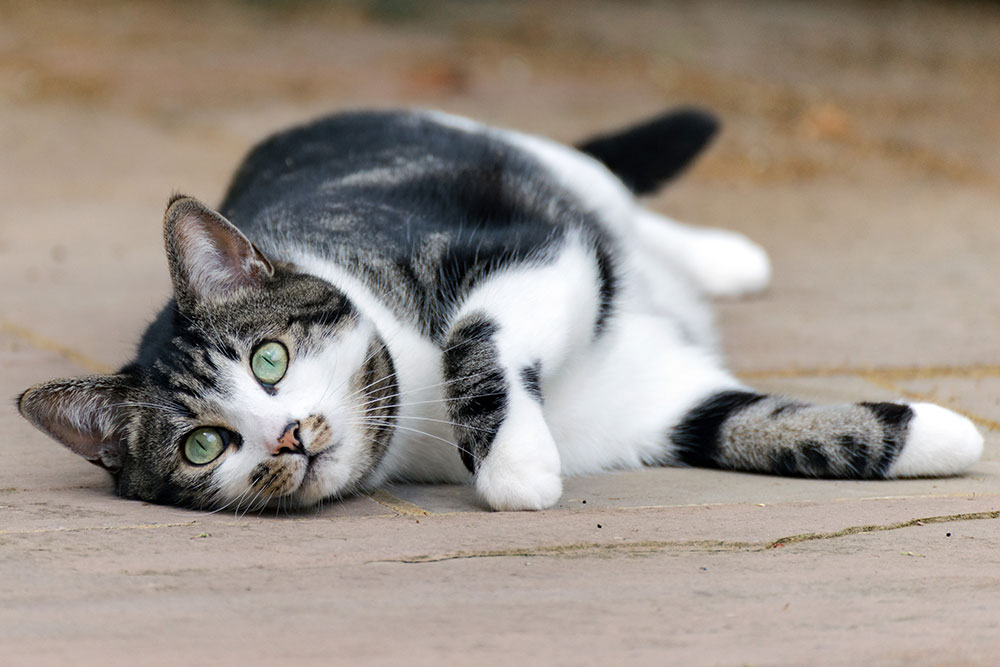 signs of urine infection in female cats